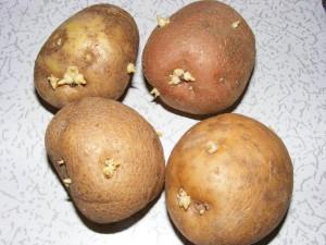клубни картофеля фото