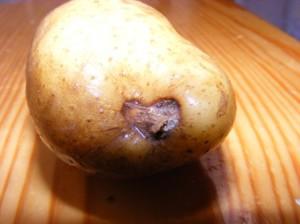 картофель Днепрянка