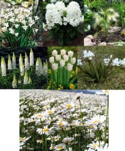 цветы для белой клумбы