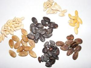 семена арбузов и дынь