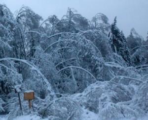 снег ломает деревья