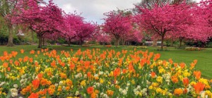 веснарий