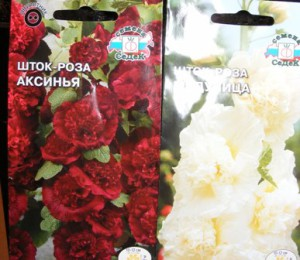 выращивание шток-розы